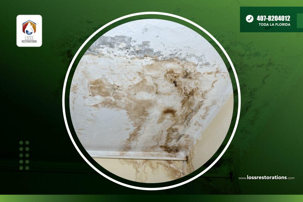 La humedad en las paredes puede crear hongos