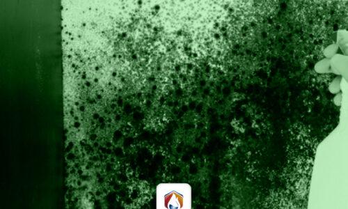 Por qué es bueno evitar los hongos y la humedad en las paredes
