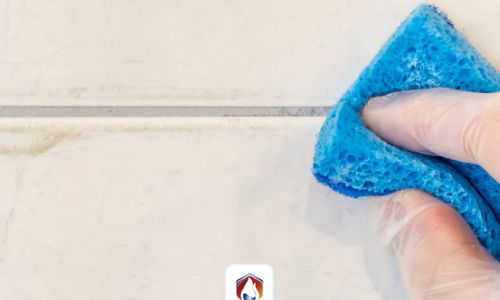Diferentes tipos de mohos que proliferan en tu hogar o negocio